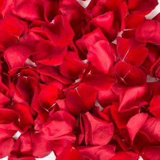 Красные лепестки роз