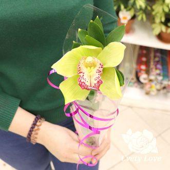 Мини-букет из 1 орхидеи